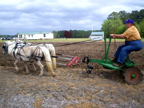 Bell and Bit pull farm disk at Hoggard's farm
