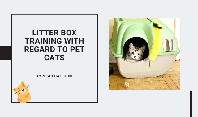 Litter Box Training with Regard to Pet Cats