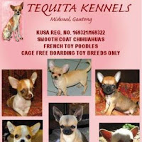 Tequita Chihuahua contact information