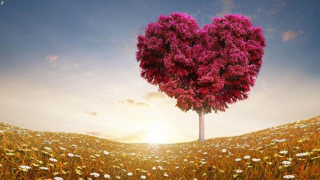 Yêu đến hơi thở cuối cùng