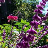 Gardening 2012 - 115_1564.JPG