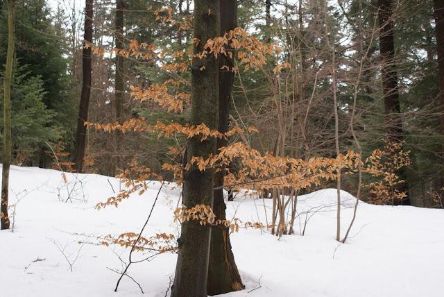 Zajęcia terenowe 29 lutego 2012 - DSC06200_1.JPG