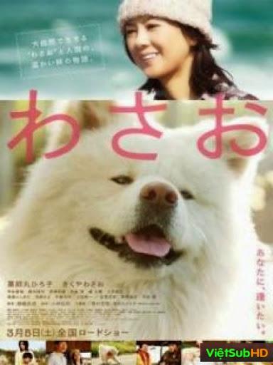 Chú Chó Akita