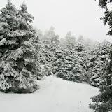 Sierra de las Nieves - Las Cañadas