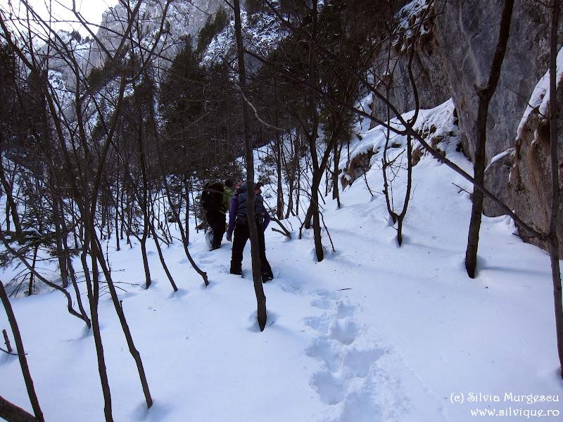 2015.02.15 - Piatra Craiului - Hornul Mare din Padina Inchisa 1B, 2lc