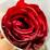 suhail salik's profile photo