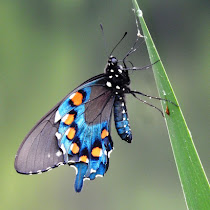 Insects and Arthropods of Alabama