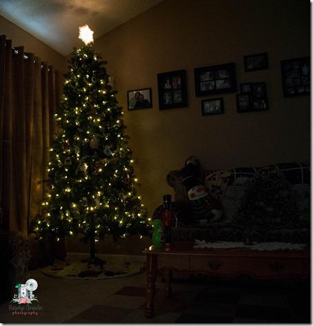 Christmas trees-1