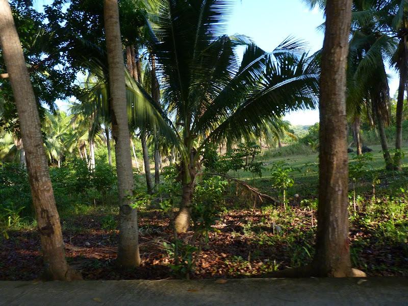 Camotes et Poron island - philippines1%2B1036.JPG