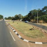 Hwange park 1