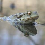 Fehergyarmat slider Fauna