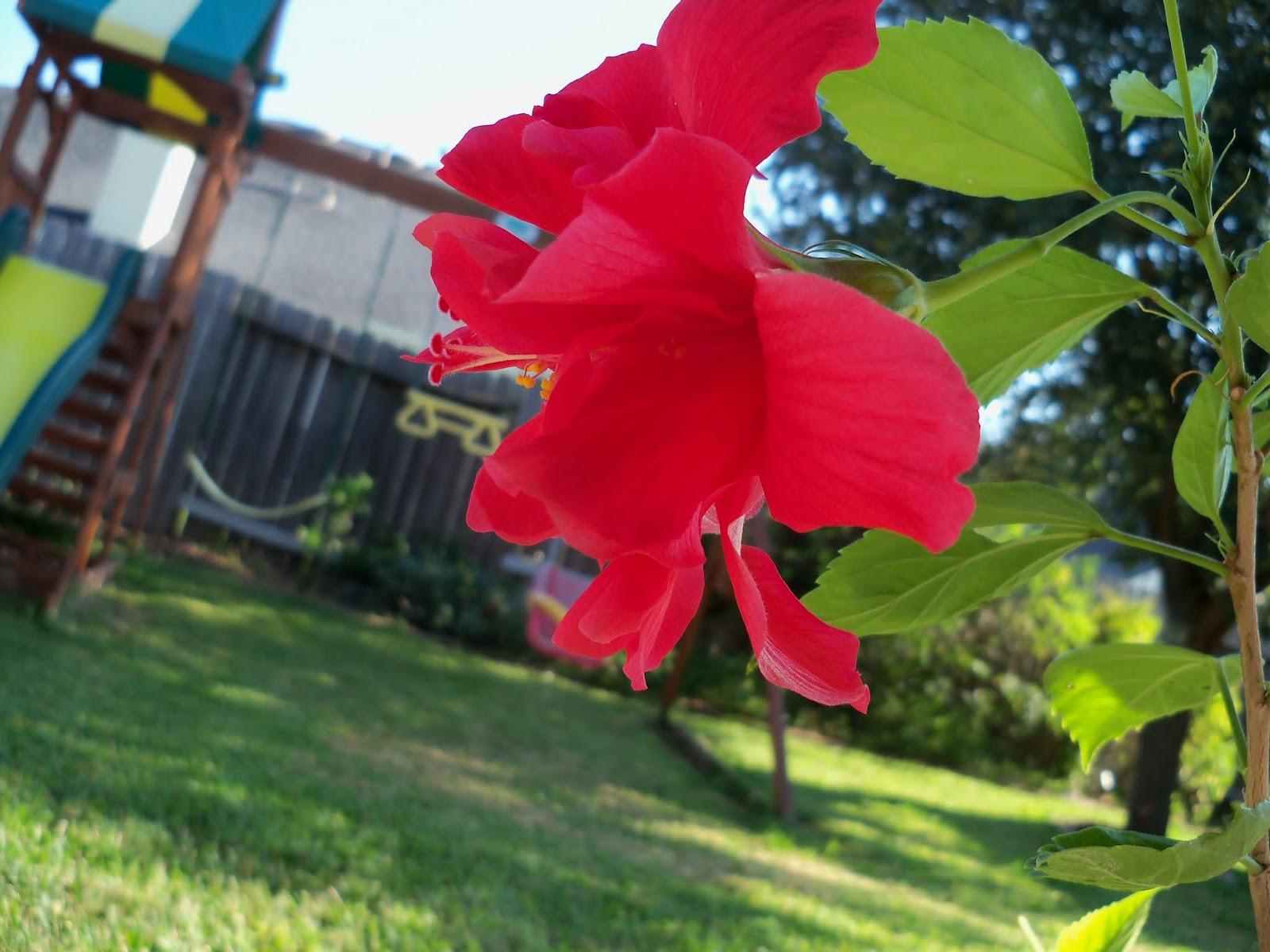 Gardening 2015 - 100_0516.JPG