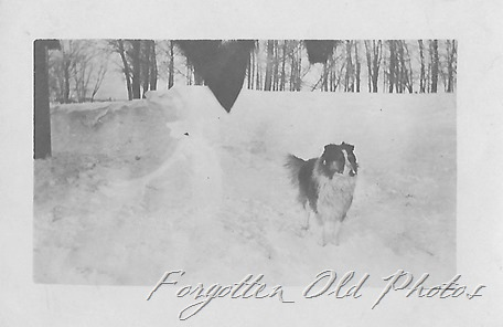 Real Photo Postcard Dog and snow DL ant