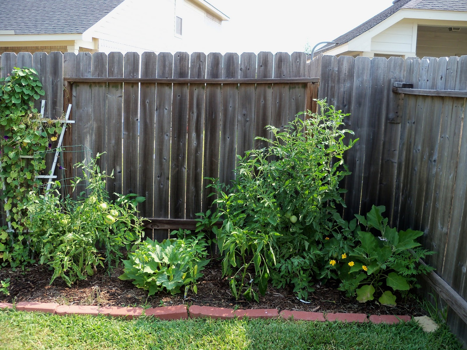 Gardening 2011 - 100_9312.JPG
