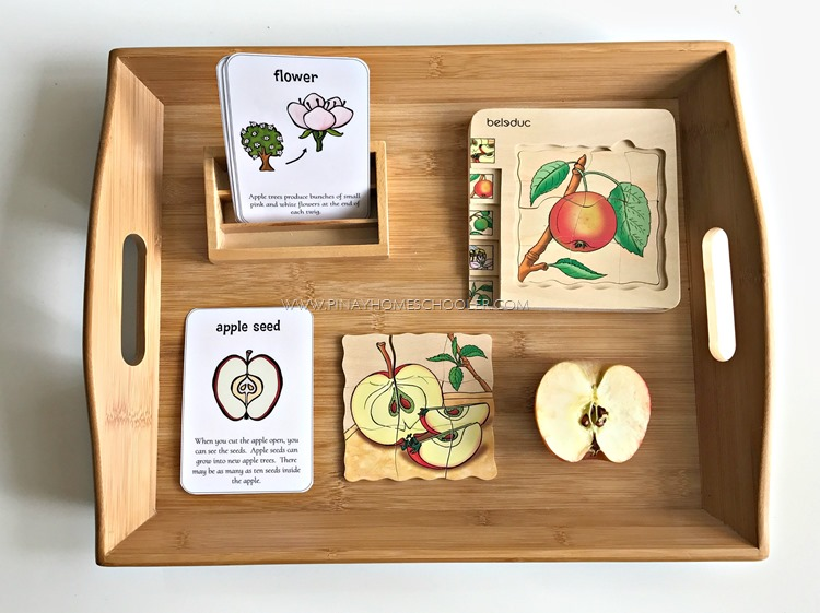Life Cycle of an Apple Autumn Themed Activity