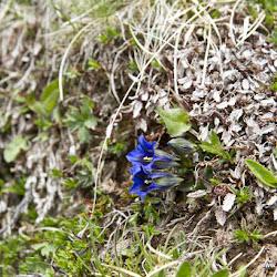 Wanderung Rosengarten 09.06.17-8839.jpg