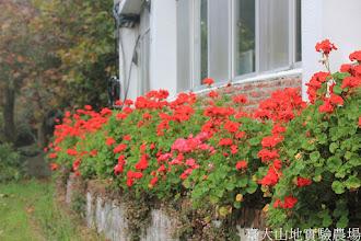Photo: 拍攝地點: 梅峰-行政中心 拍攝植物: 天竺葵 拍攝日期: 2015_10_27_FY