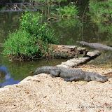 04-07-12 Homosassa Springs State Park - IMGP0041.JPG