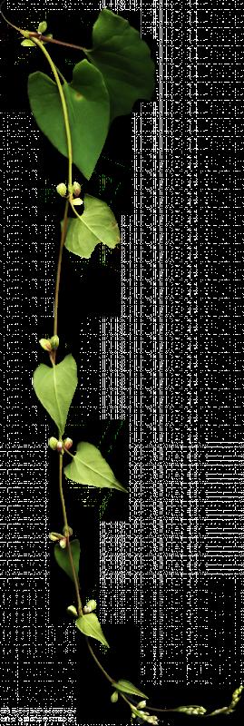 ramo de folhas