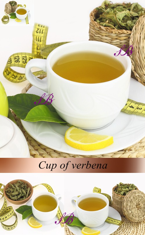 Stock Photo: Cup of verbena