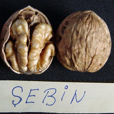 Себин грецкий орех