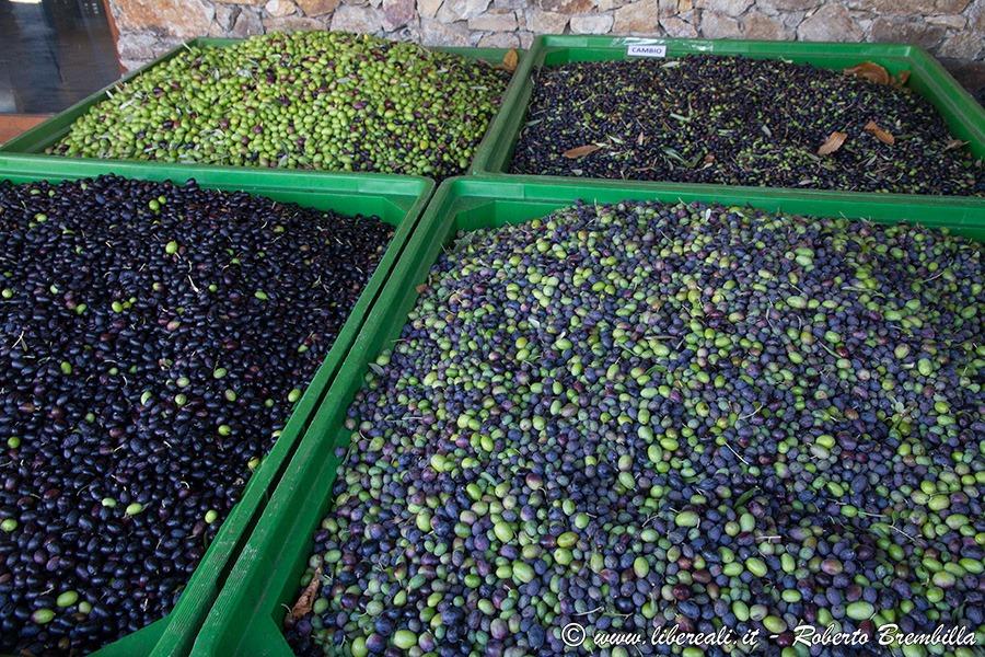 [2-2018-10-24_Frantolio-Olive-Biosio-%5B2%5D]