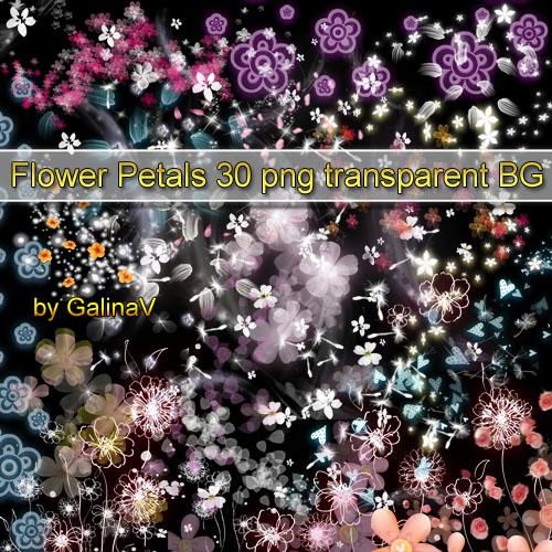 Клипарт Цветы, цветочные лепестки PNG