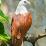 Panama Cupid's profile photo