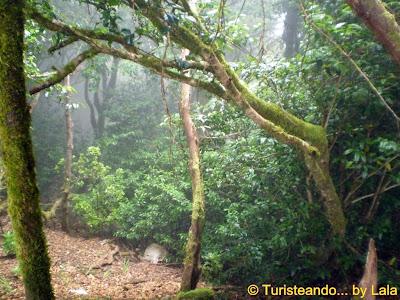 Senderismo Parque Rural Anaga Tenerife, Canarias