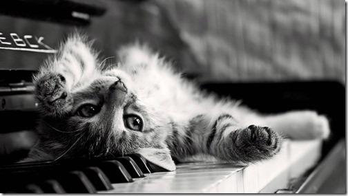 22 fotos de gats (22)