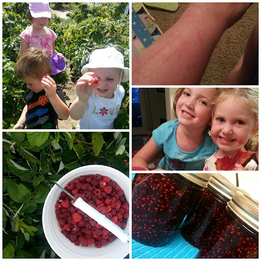 Berry Picking Adventures