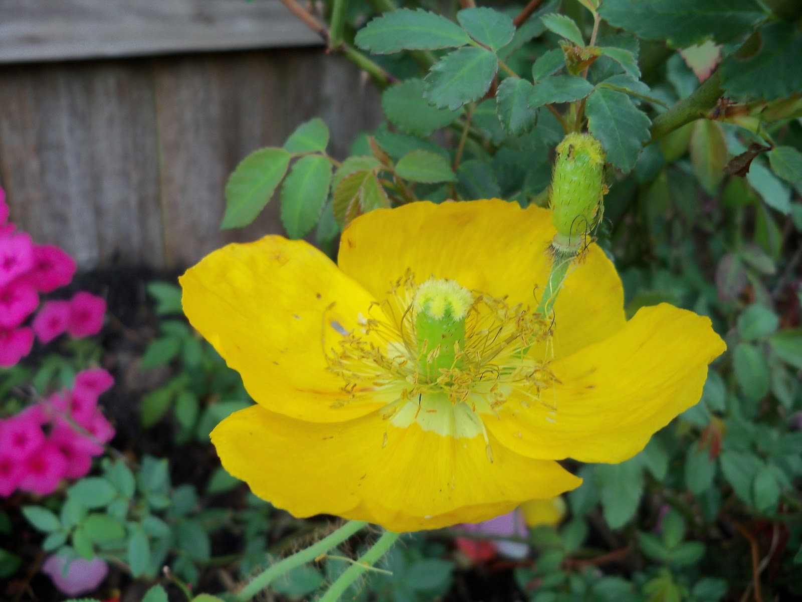 Gardening 2011 - 100_7162.JPG