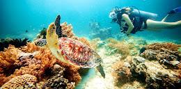 gili-trawangan-sea-turtle-snorkeling-956x470
