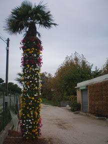 idée : pillier en sphaigne le palmier fleuri de ST-CYR-SUR-MER