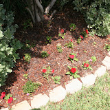 Gardening 2012 - IMG_3862.JPG