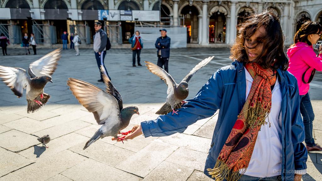 St.Mark Square Anu Pigeons