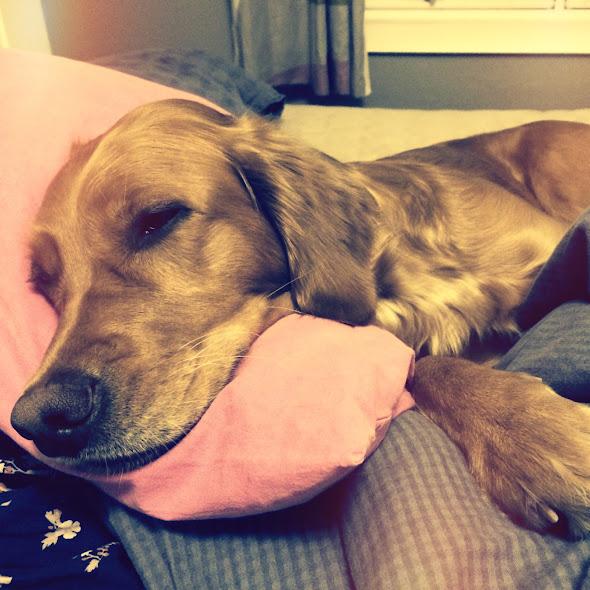 Scala har sovnet i senga vår…