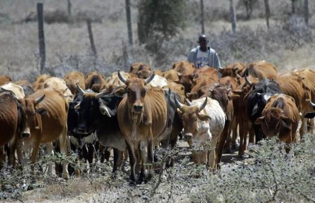 Herdsmen invadetree plantation inOgun