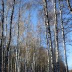 Озеро Круглое Подгоренский район 031.jpg