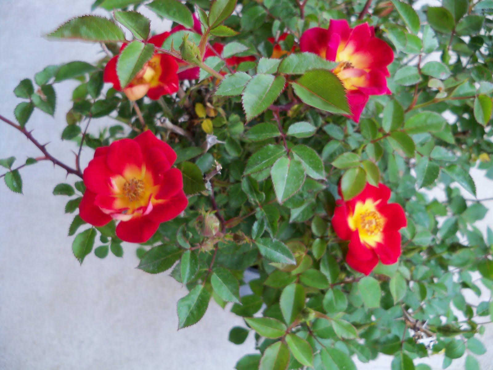 Gardening 2010 - 101_0723.JPG