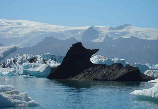 the algore black love poodle iceberg