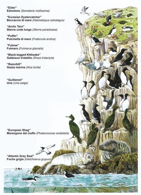 18-uccelli scogliera (Medium)