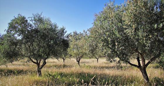 """Andalucía está ya """"muy cerca"""" de cumplir el objetivo ecológico de Europa 2030"""