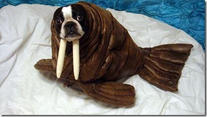 disfraces divertidos para perros  (6)