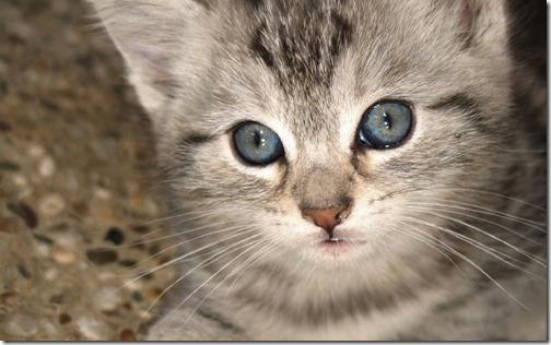 22 fotos de gats (13)