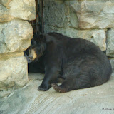 Pittsburgh Zoo Revisited - DSC05201.JPG