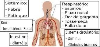 Um corpo humano indicando os sintomas de coronavírus