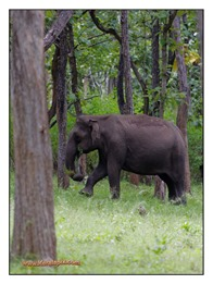 _MG_4058_www.keralapix.com_Mudumalai Bandipur Forest Road