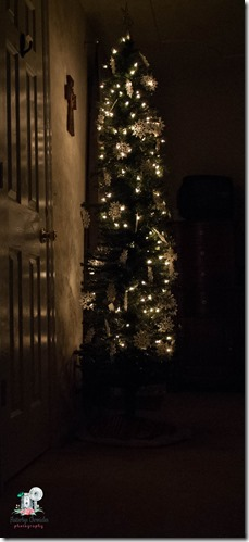 Christmas trees-2