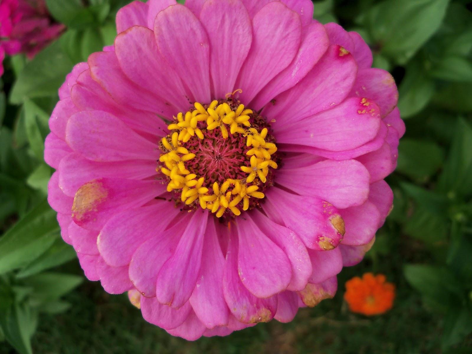 Gardening 2011 - 100_8822.JPG